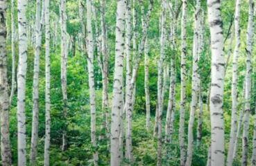 Trees name in English