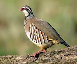 birds name english and hindi